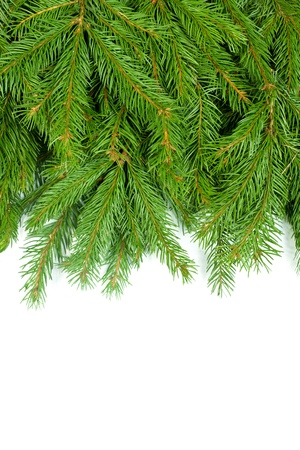 coniferous tree: Christmas green framework isolated on white background