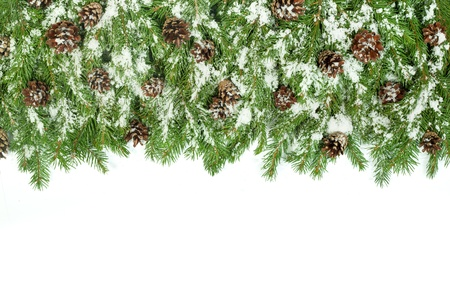 Christmas background with snow, and cones isolated on white Stock Photo - 15548686