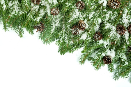 Christmas background with snow, and cones isolated on white Stock Photo - 15548706
