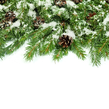 Christmas background with snow, and cones isolated on white Stock Photo - 15548720