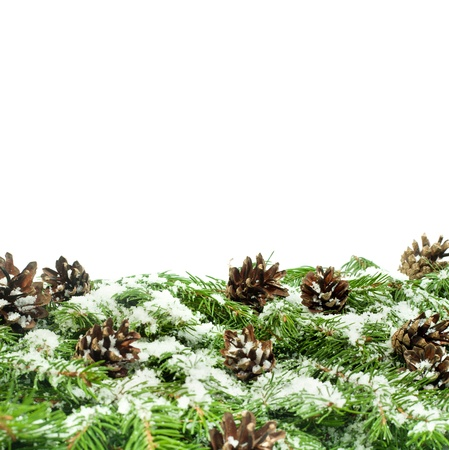 Christmas background with snow, and cones isolated on white Stock Photo - 15548684