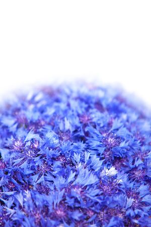 garden cornflowers: Beautiful spring flowers blue cornflower on background. Blue flowers pattern Stock Photo