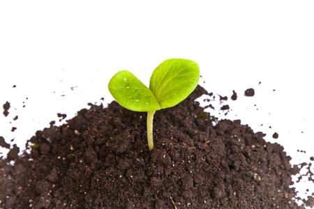 Hoop vuil met een groene plant spruit geïsoleerd op witte achtergrond