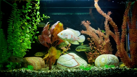 anubias: A green beautiful planted tropical freshwater aquarium Stock Photo