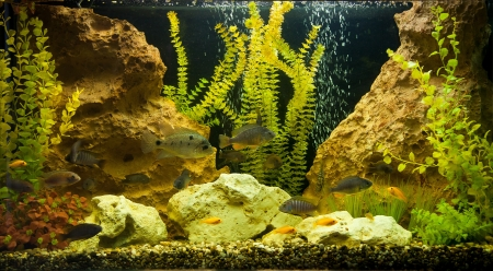 A green beautiful planted tropical freshwater aquarium photo