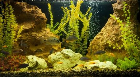 A green beautiful planted tropical freshwater aquarium Stock Photo