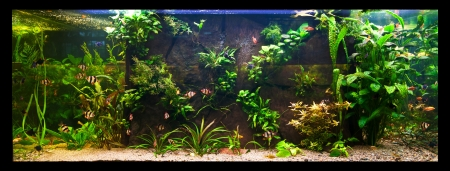 A green beautiful planted tropical freshwater aquarium with fishes Stock Photo - 15933588