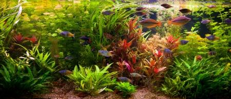Zelená krásná zasadil tropické sladkovodní akvárium s rybkami