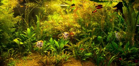 A green beautiful planted tropical freshwater aquarium with fishes Stock Photo - 15933587