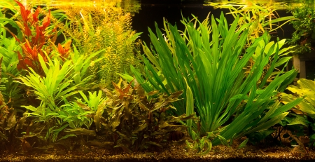 freshwater: A green beautiful planted tropical freshwater aquarium with fishes Stock Photo