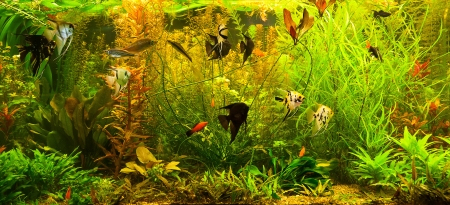 A green beautiful planted tropical freshwater aquarium with fishes Stock Photo - 15933633