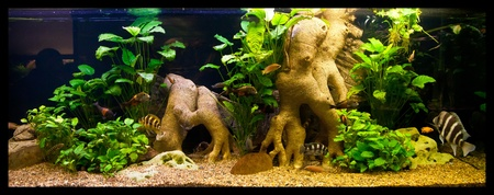mahseer: A green beautiful planted tropical freshwater aquarium with fishes Stock Photo