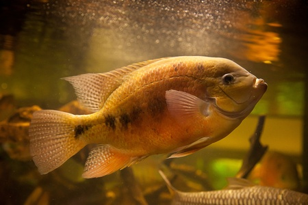 A green beautiful planted tropical freshwater aquarium with fish Stock Photo - 15933441