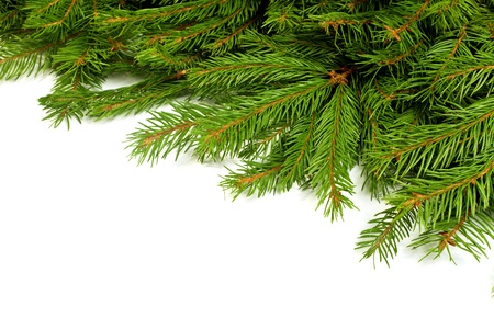 pine trees: Christmas green framework isolated on white background