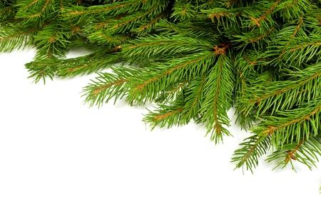 arbol de pino: Navidad marco verde aislado sobre fondo blanco