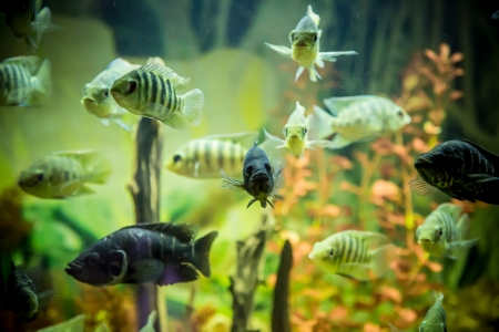A green beautiful planted tropical freshwater aquarium with fishes Stock Photo - 17634677