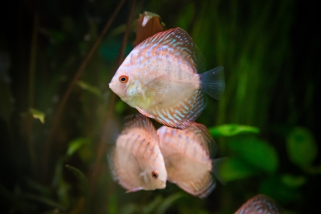 A green beautiful planted tropical freshwater aquarium with fishes Stock Photo - 17634630