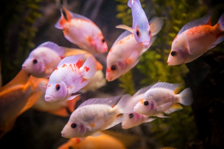 A green beautiful planted tropical freshwater aquarium with fishes Stock Photo - 17634626