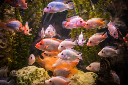 A green beautiful planted tropical freshwater aquarium with fishes Stock Photo - 17634661