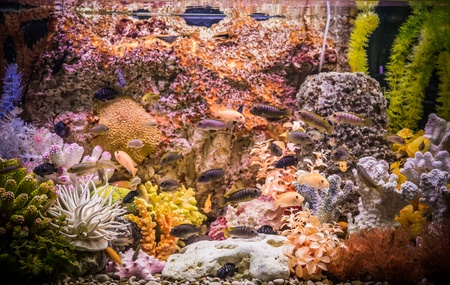 A green beautiful planted tropical freshwater aquarium with fishes Stock Photo - 17634879