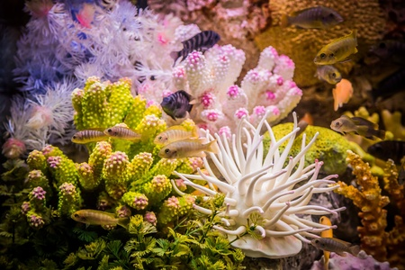 A green beautiful planted tropical freshwater aquarium with fishes Stock Photo - 17634794