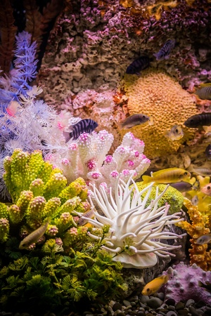 A green beautiful planted tropical freshwater aquarium with fishes Stock Photo - 17634819