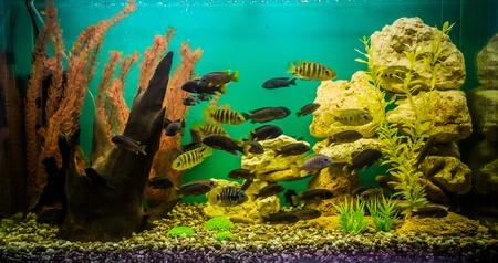 A green beautiful planted tropical freshwater aquarium with fishes photo