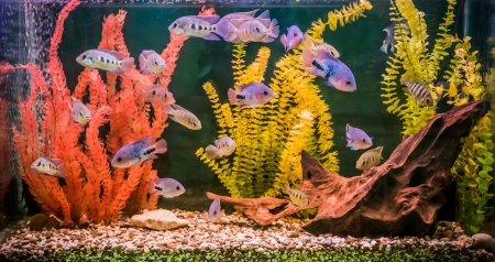 A green beautiful planted tropical freshwater aquarium with fishes Reklamní fotografie