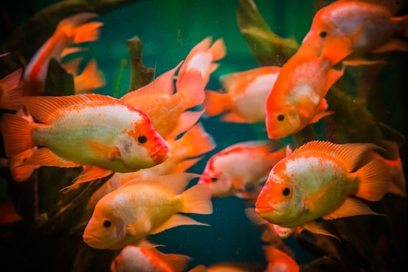A green beautiful planted tropical freshwater aquarium with fishes Stock Photo - 17634624