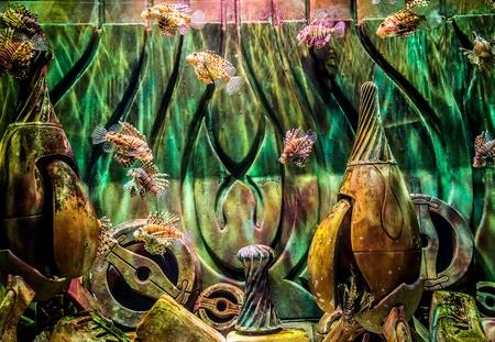 Lionfish in a Dubai aquarium. Pterois mombasae. Petrois Volitans. Lionfish. Turkeyfish. Scorpionfish. Firefish. Stock Photo - 18796392