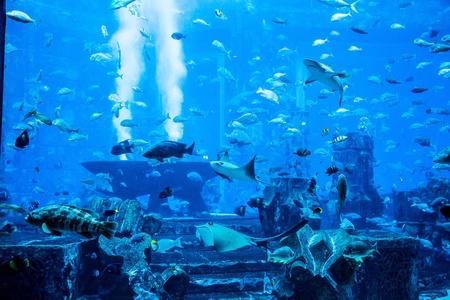Photo of a tropical fish on a coral reef in Dubai aquarium photo