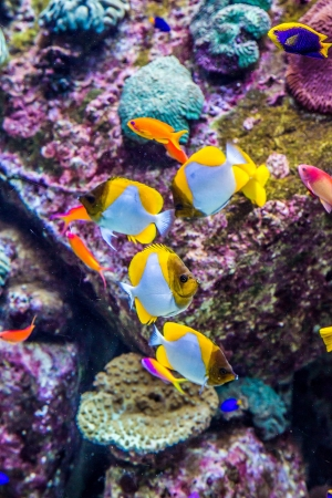 live coral: Photo of a tropical fish on a coral reef in Dubai aquarium Stock Photo