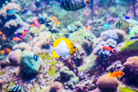 reefscape: Photo of a tropical fish on a coral reef in Dubai aquarium Stock Photo