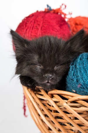 Black kitten playing with a red ball of yarn isolated on a white background photo