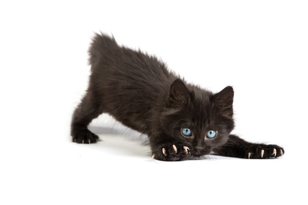 Frightened black kitten standing in front of white background photo