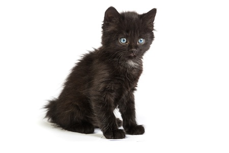 Cute black small kitten isolated on a white background photo