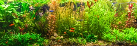 aquarium fish: A green beautiful planted tropical freshwater aquarium with fishes Stock Photo