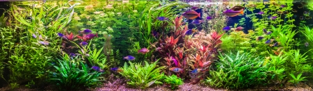 A green beautiful planted tropical freshwater aquarium with fishes Фото со стока