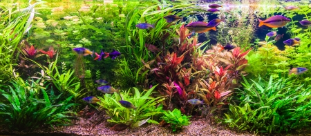 aquarium hobby: A green beautiful planted tropical freshwater aquarium with fishes Stock Photo