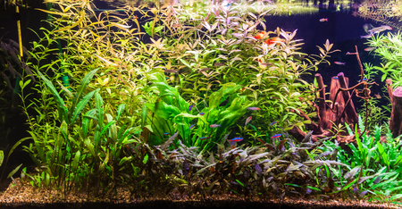 A green beautiful planted tropical freshwater aquarium with fishes Stock Photo - 22260327