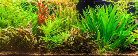 A green beautiful planted tropical freshwater aquarium with fishes Stock Photo - 22260357