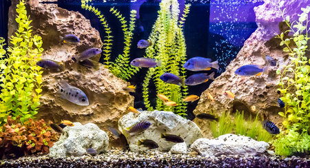 A green beautiful planted tropical freshwater aquarium with fishes Stock Photo - 22260362
