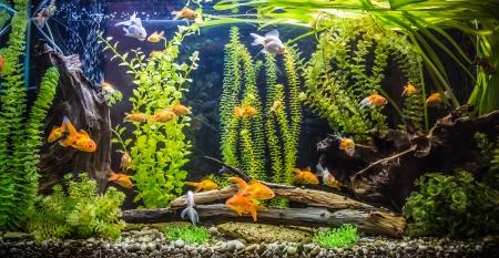 물고기와 녹색 아름다운 심은 열대 민물 수족관 스톡 콘텐츠