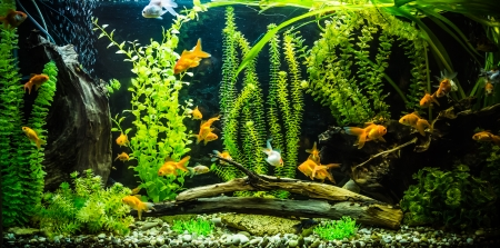 A green beautiful planted tropical freshwater aquarium with fishes Stok Fotoğraf