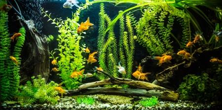 Zeleným překrásná zasadil tropické sladkovodní akvárium s rybami