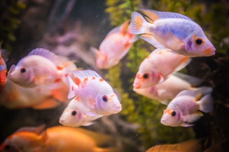 A green beautiful planted tropical freshwater aquarium with fishes Stock Photo - 22260620
