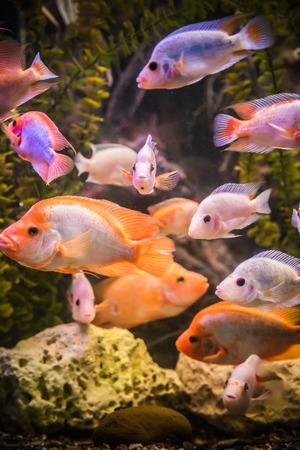 A green beautiful planted tropical freshwater aquarium with fishes Stock Photo - 22260622