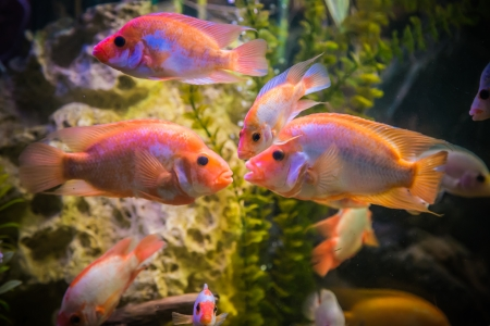 A green beautiful planted tropical freshwater aquarium with fishes Stock Photo - 22260623