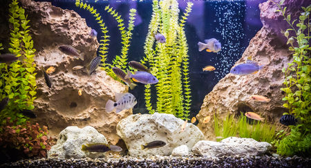 A green beautiful planted tropical freshwater aquarium with fishes Stock Photo - 22260627