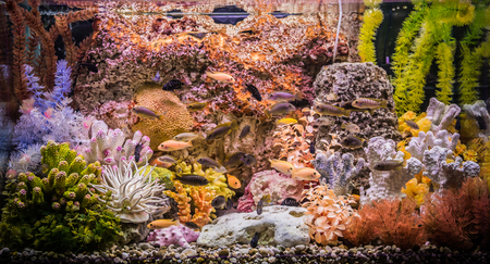A green beautiful planted tropical freshwater aquarium with fishes Stock Photo - 22260635